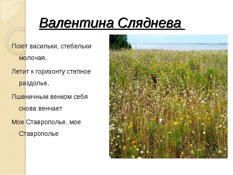 Валентина Сляднева Поют васильки, стебельки молочая, Летит к горизонту степно...