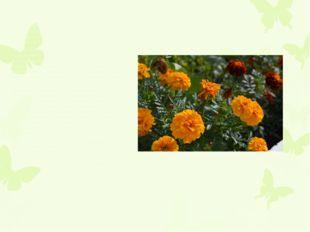 Многолетнее травянистое, полукустарниковое или кустарниковое растение с неск
