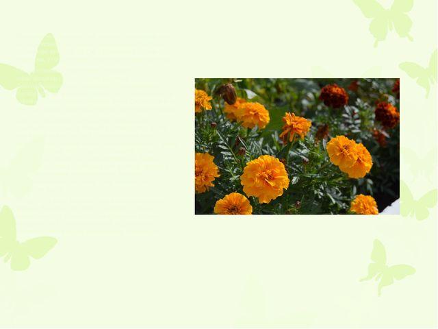 Многолетнее травянистое, полукустарниковое или кустарниковое растение с неск...