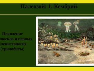 Палеозой: 1. Кембрий Появление моллюсков и первых членистоногих (трилобиты)
