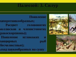 Палеозой: 3. Силур Появление папоротникообразных; Расцвет головоногих моллюск