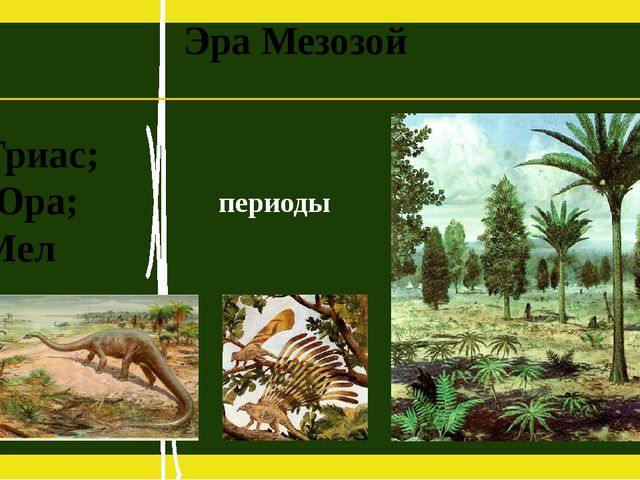 Эра Мезозой Триас; Юра; Мел периоды