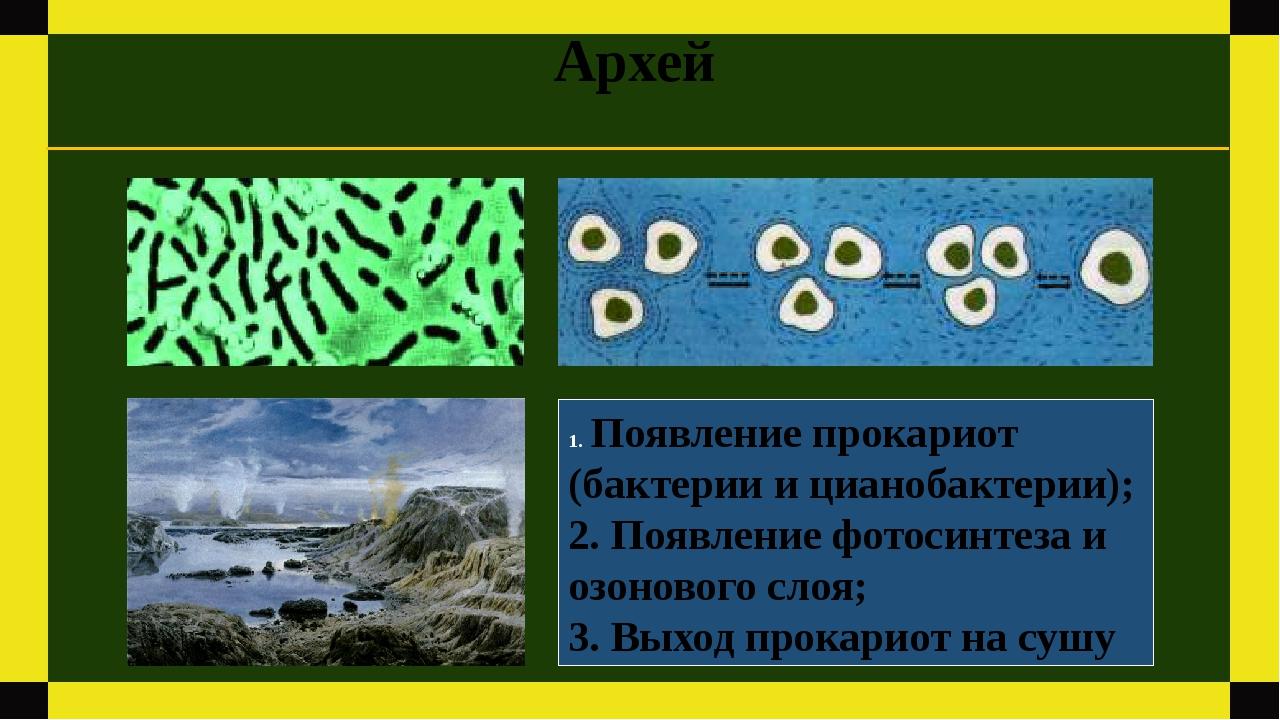 Архей Появление прокариот (бактерии и цианобактерии); 2. Появление фотосинтез...