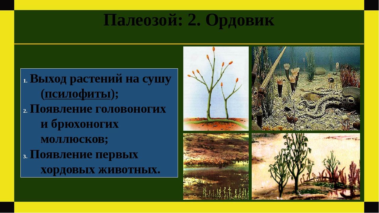 Палеозой: 2. Ордовик Выход растений на сушу (псилофиты); Появление головоноги...