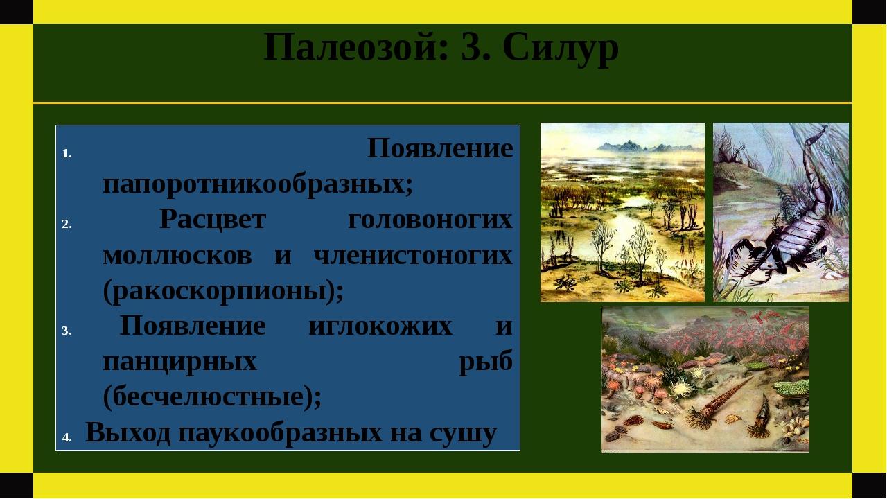 Палеозой: 3. Силур Появление папоротникообразных; Расцвет головоногих моллюск...