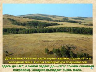 Для климата степей характерны жаркое, сухое лето и холодная зима. Летом темпе