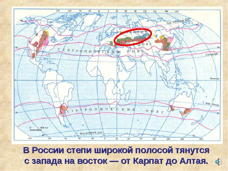 В России степи широкой полосой тянутся с запада на восток — от Карпат до Алтая.