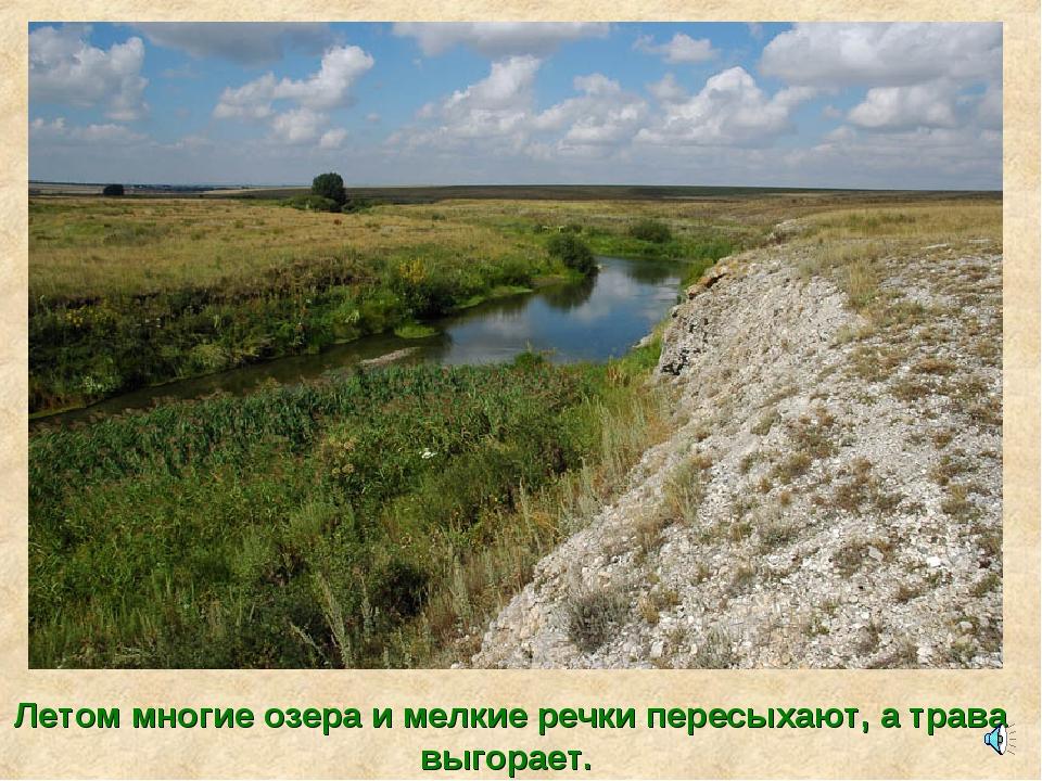Летом многие озера и мелкие речки пересыхают, а трава выгорает.