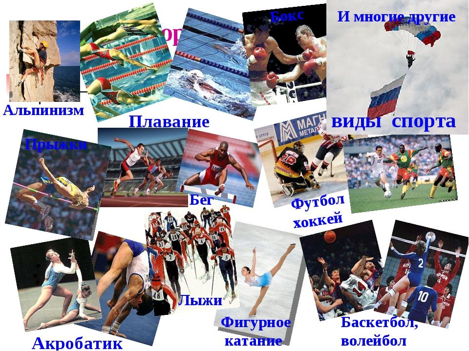 «виды спортивных направлений»