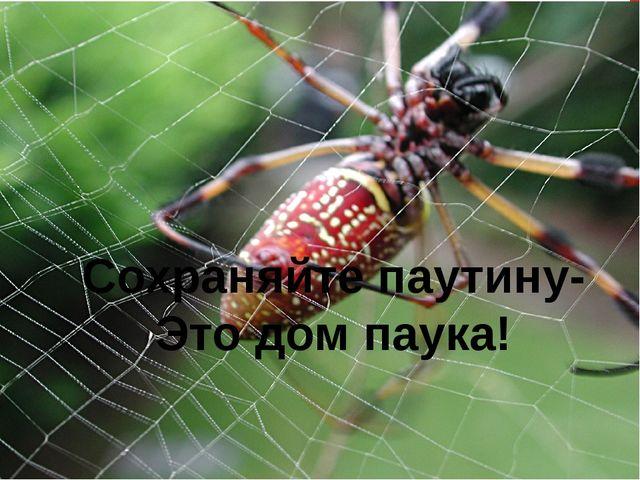 Сохраняйте паутину- Это дом паука!