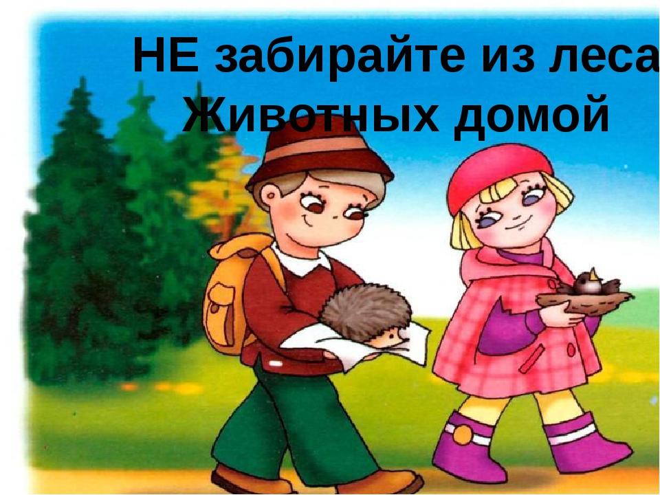 НЕ забирайте из леса Животных домой