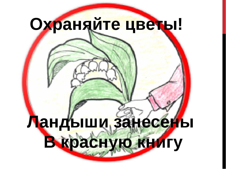Охраняйте цветы! Ландыши занесены В красную книгу