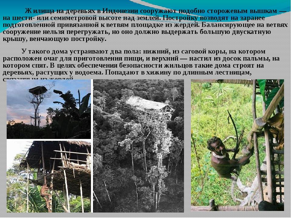 Жилища на деревьях в Индонезии сооружают подобно сторожевым вышкам — на шест...