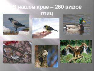 В нашем крае – 260 видов птиц