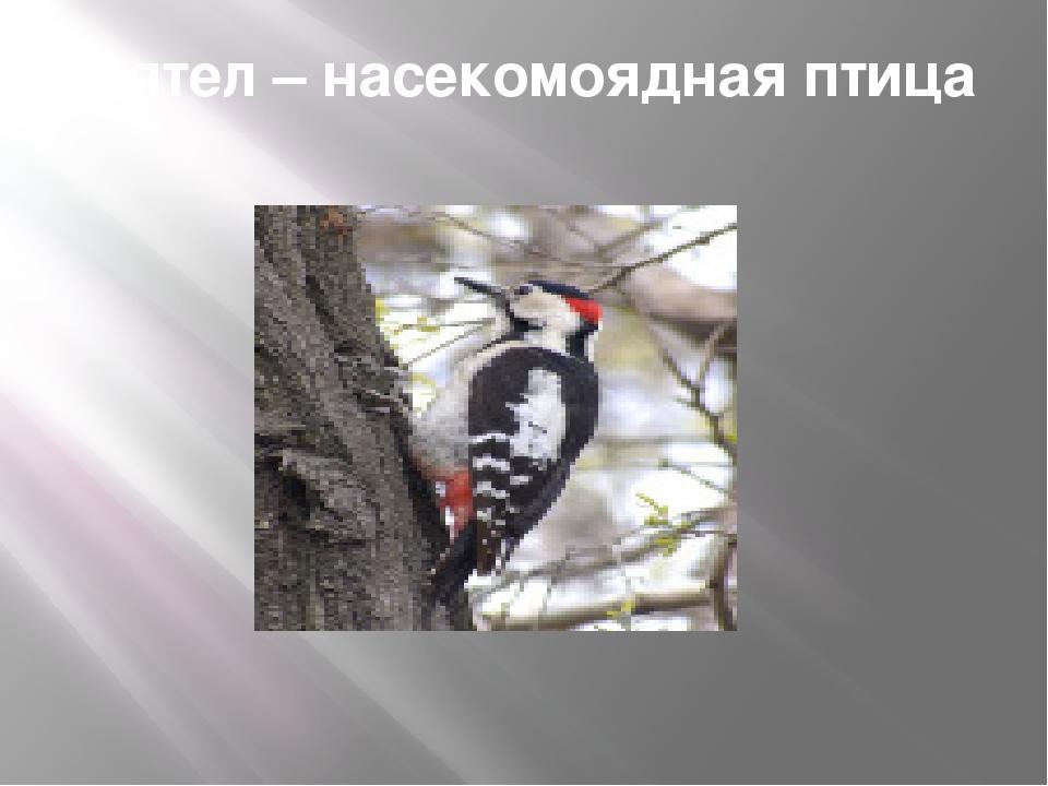 Дятел – насекомоядная птица