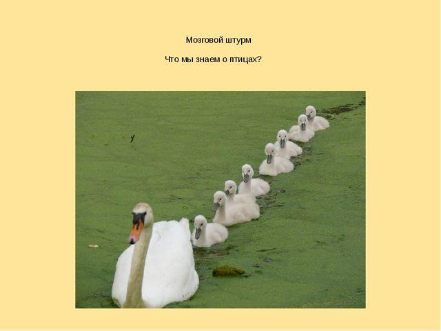 Что мы знаем о птицах? Мозговой штурм