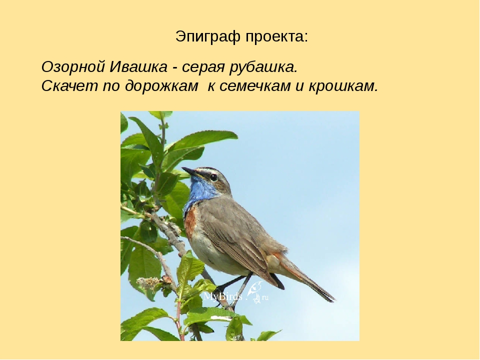 Эпиграф проекта: Озорной Ивашка - серая рубашка. Скачет по дорожкам к семечк...