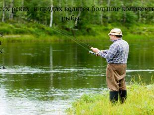 Во всех реках и прудах водится большое количество рыбы. окунь щука судак лещ