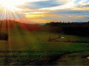 Основные богатства нашего края – это сосновые, еловые и смешанные леса. Возду