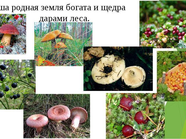 Наша родная земля богата и щедра дарами леса.