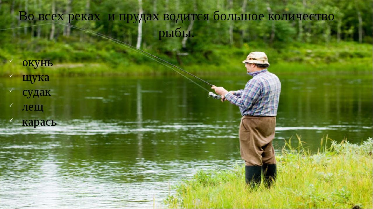 Во всех реках и прудах водится большое количество рыбы. окунь щука судак лещ...