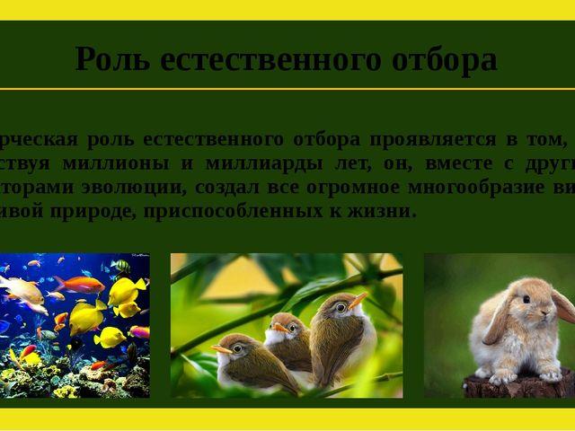 Творческая роль естественного отбора проявляется в том, что действуя миллионы...