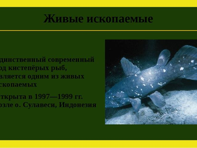Единственный современный род кистепёрых рыб, является одним из живых ископаем...