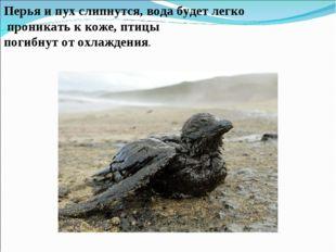 Перья и пух слипнутся, вода будет легко проникать к коже, птицы погибнут от