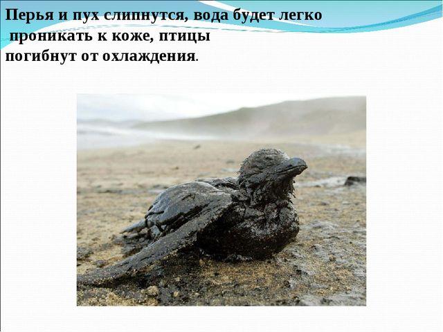 Перья и пух слипнутся, вода будет легко проникать к коже, птицы погибнут от...