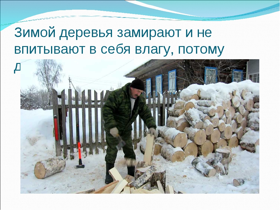 Зимой деревья замирают и не впитывают в себя влагу, потому дрова из них сухие.