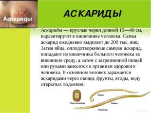 АСКАРИДЫ Аскариды — круглые черви длиной 15—40 см, паразитируют в кишечнике ч