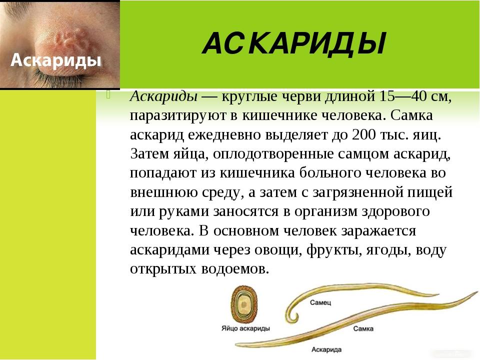 АСКАРИДЫ Аскариды — круглые черви длиной 15—40 см, паразитируют в кишечнике ч...