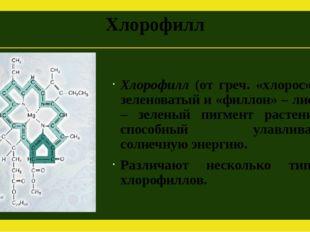 Хлорофилл Хлорофилл (от греч. «хлорос» – зеленоватый и «филлон» – лист) – зел