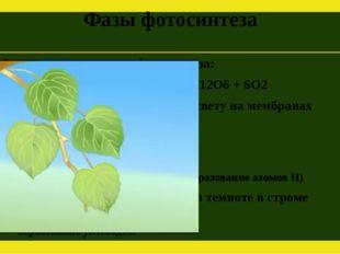 Фазы фотосинтеза Суммарное уравнение фотосинтеза: 6СО2 + 6Н2О = С6Н12О6 + 6О2