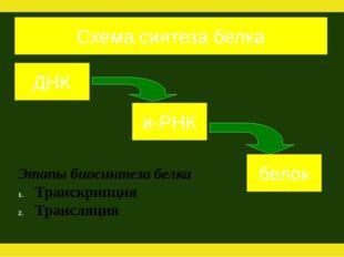 ДНК и-РНК белок Схема синтеза белка Этапы биосинтеза белка Транскрипция Транс