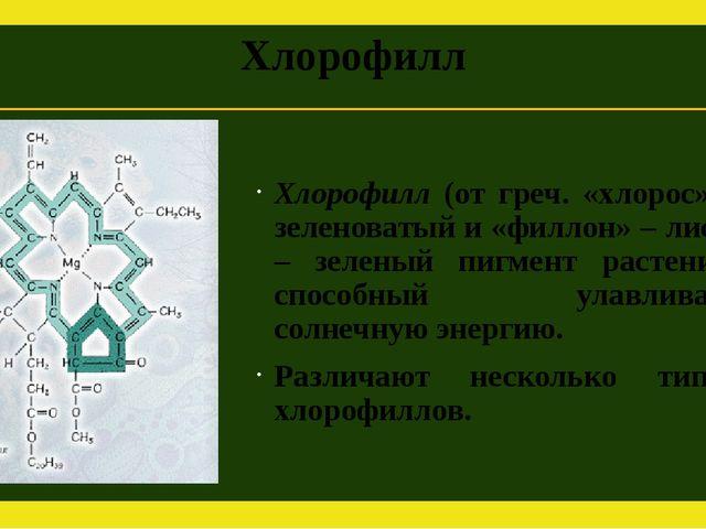 Хлорофилл Хлорофилл (от греч. «хлорос» – зеленоватый и «филлон» – лист) – зел...