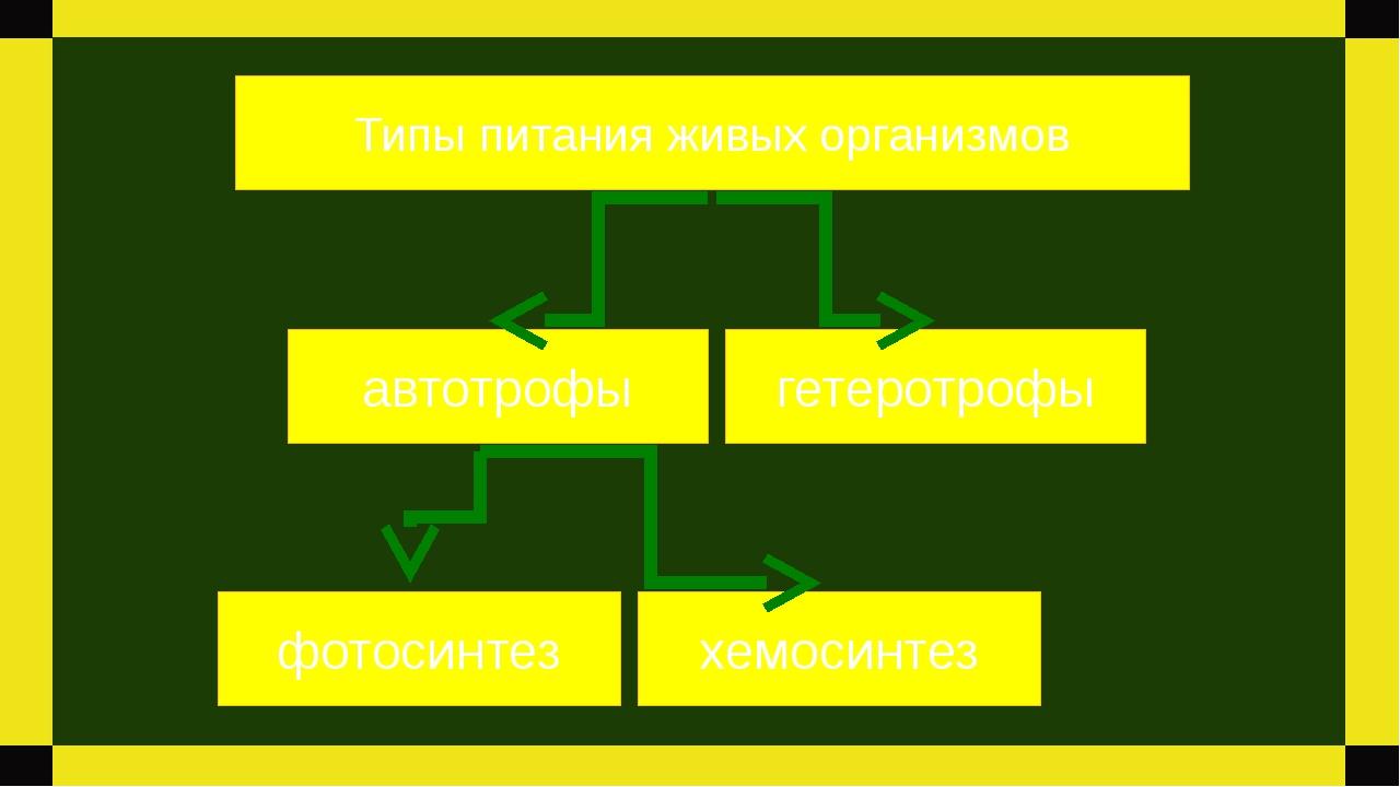 автотрофы гетеротрофы фотосинтез Типы питания живых организмов хемосинтез