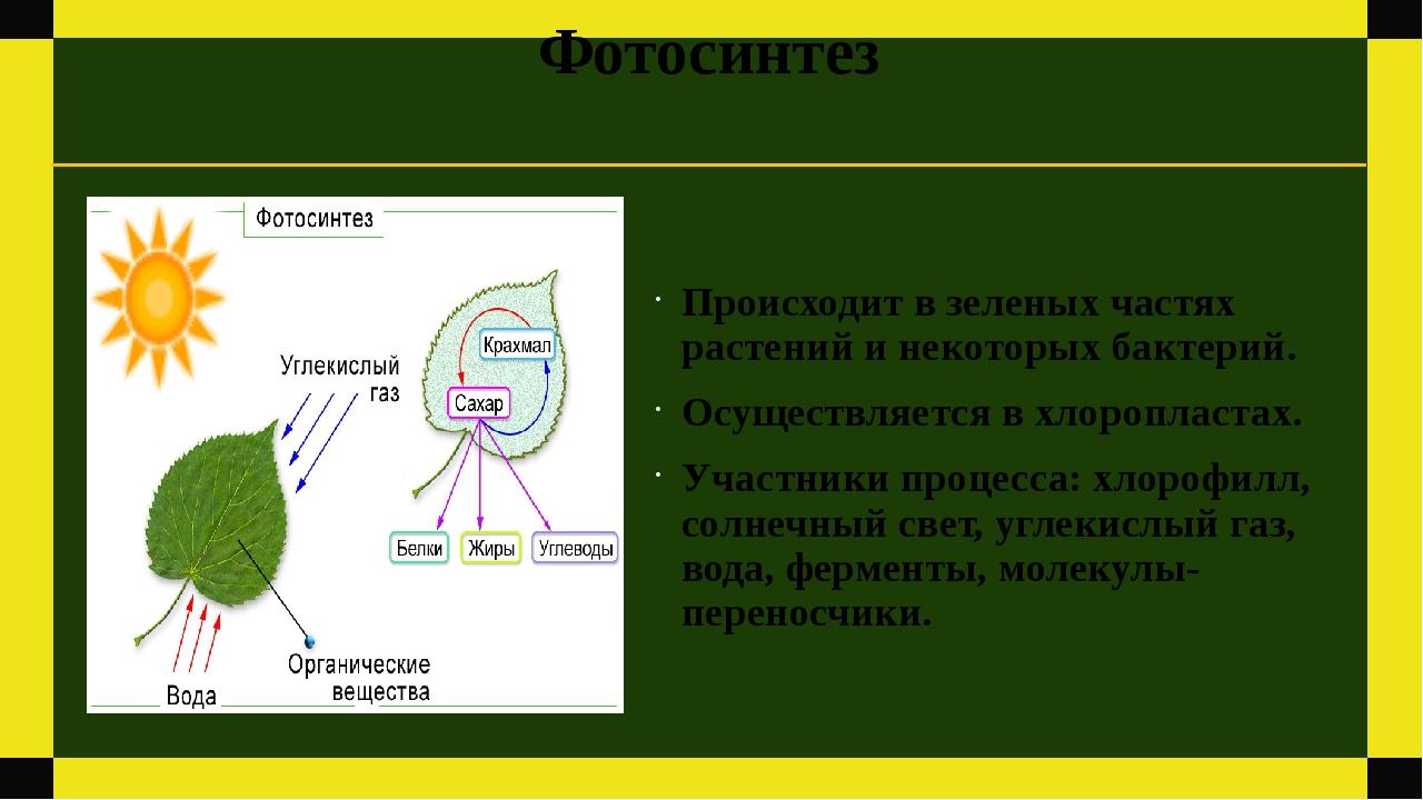 Фотосинтез Происходит в зеленых частях растений и некоторых бактерий. Осущест...
