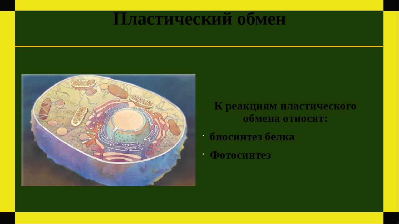 Пластический обмен К реакциям пластического обмена относят: биосинтез белка Ф...