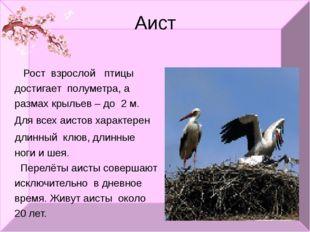 Аист Рост взрослой птицы достигает полуметра, а размах крыльев – до 2 м. Для