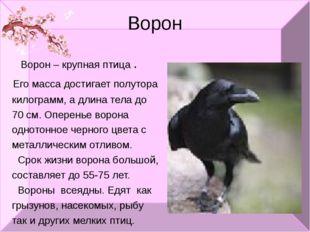 Ворон Ворон – крупная птица . Его масса достигает полутора килограмм, а длина