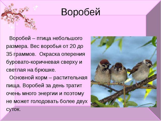 Воробей Воробей – птица небольшого размера. Вес воробья от 20 до 35 граммов....