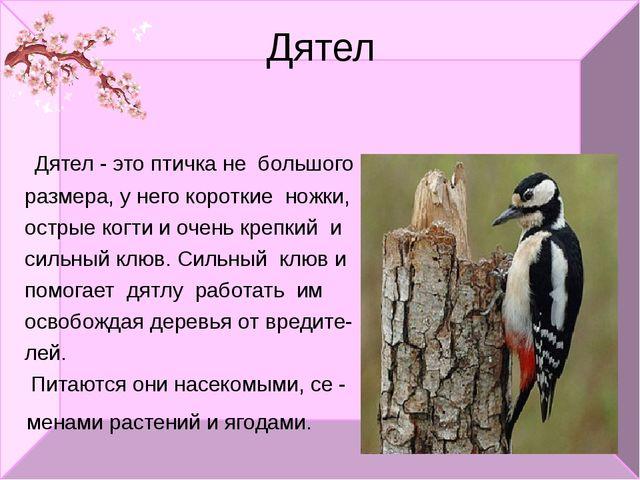 Дятел Дятел - это птичка не большого размера, у него короткие ножки, острые к...