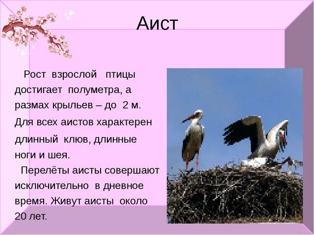 Аист Рост взрослой птицы достигает полуметра, а размах крыльев – до 2 м. Для...