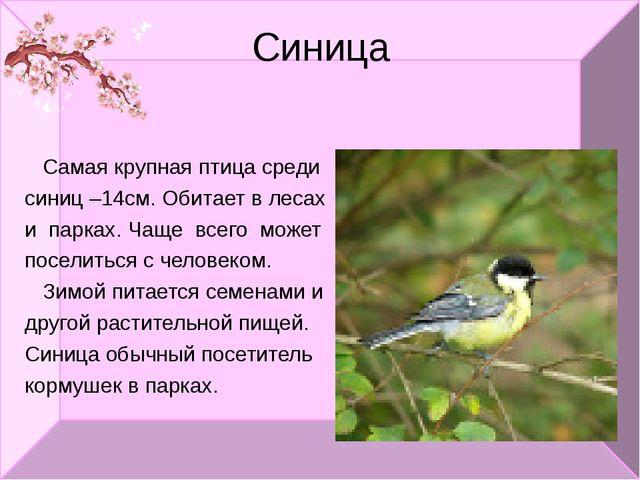 Синица Самая крупная птица среди синиц –14см. Обитает в лесах и парках. Чаще...