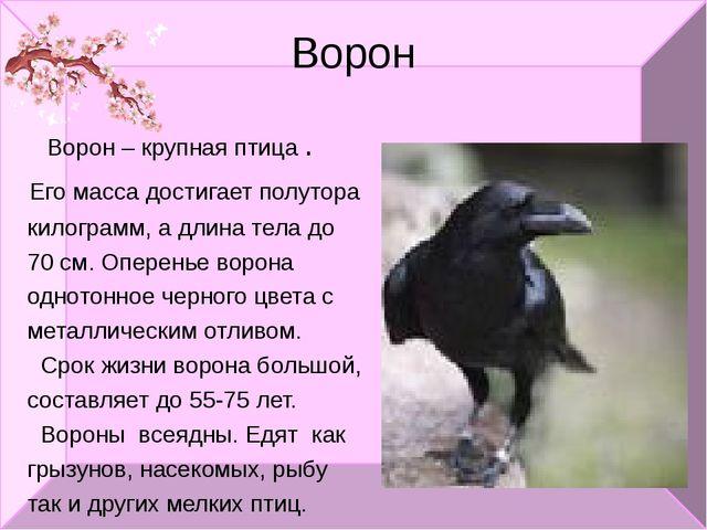 Ворон Ворон – крупная птица . Его масса достигает полутора килограмм, а длина...