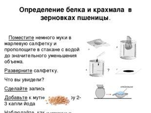 Определение белка и крахмала в зерновках пшеницы. Поместите немного муки в ма