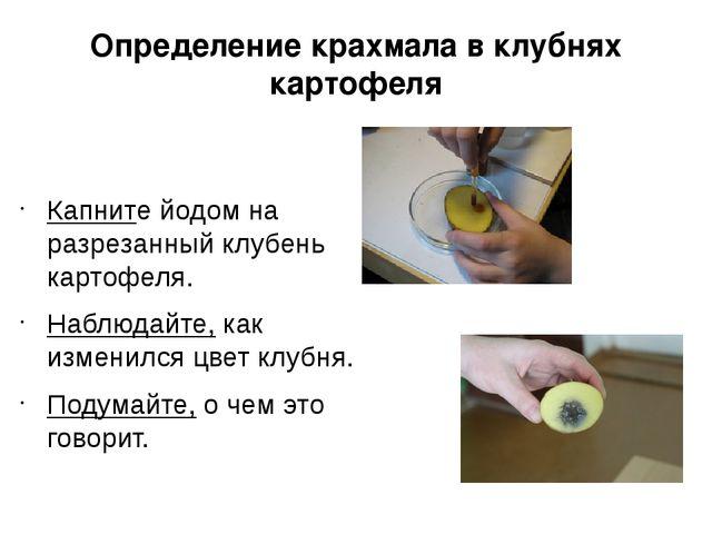 Определение крахмала в клубнях картофеля Капните йодом на разрезанный клубень...