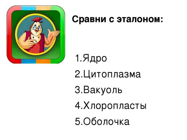1.Ядро 2.Цитоплазма 3.Вакуоль 4.Хлоропласты 5.Оболочка Сравни с эталоном: