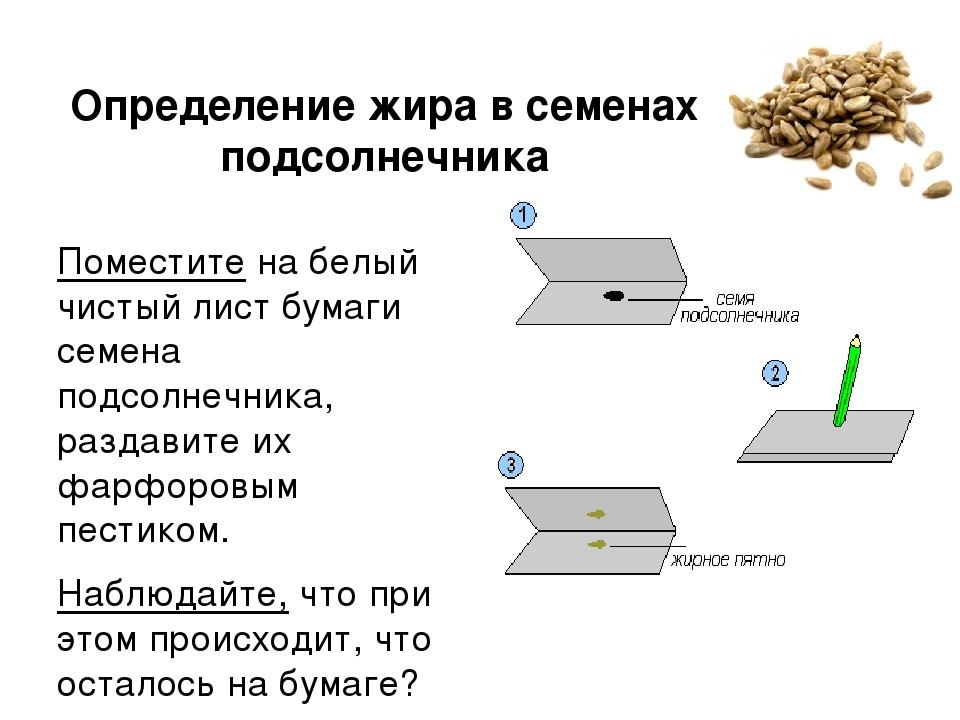 Определение жира в семенах подсолнечника Поместите на белый чистый лист бумаг...